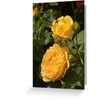 Lovely yellow roses Greeting Card