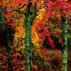 Autumn Leaf Color Blast by KellyHeaton