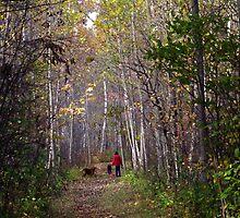 A walk in the forest by Janet Gosselin