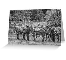 Pack Mules Greeting Card
