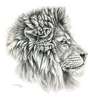King - Lions profile g044 by schukina Photographic Print