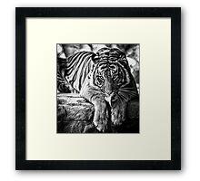 Tiger Tongue Framed Print