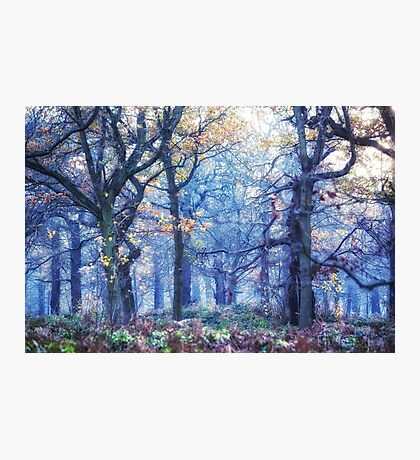 The Enchanted Forest ~ Landscape Photographic Print