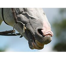 Horse Close Up Photographic Print