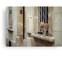 Ginger Cat - Arles, France Canvas Print