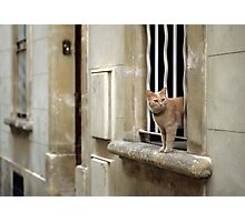 Ginger Cat - Arles, France Photographic Print