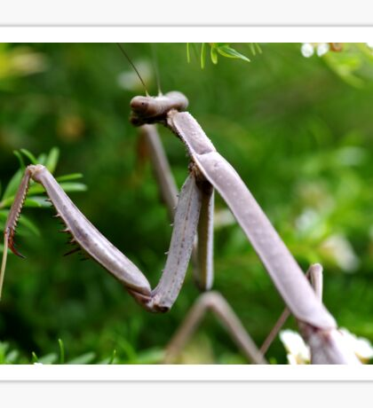 Stick Insect Sticker