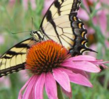 Tiger Swallowtail on Purple Coneflower Sticker