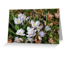 Beginning of spring Greeting Card