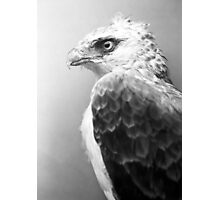 Animal 5 Photographic Print