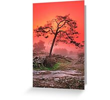 PINE IN FOG AT SUNSET Greeting Card