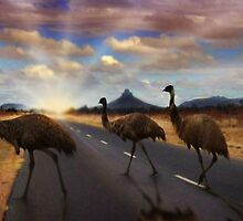 3 Emu's by Cliff Vestergaard