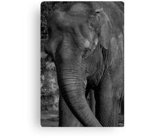 Old & Wise Canvas Print