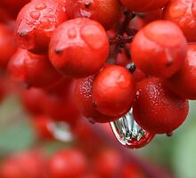 berries reflections by ANNABEL   S. ALENTON