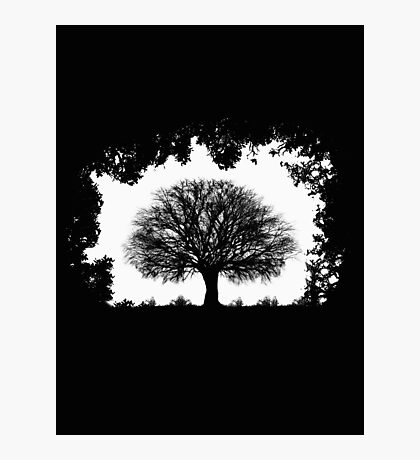 Tree Window Photographic Print