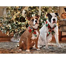 A Bubba and Kensie Christmas - No Text Photographic Print