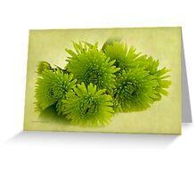 Green Spider Chrysanthemums Greeting Card