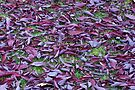 Scattered Plum Tree Leaves  by Sandra Foster