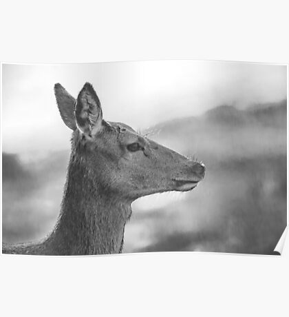 Red Deer Hind in Black and White Poster