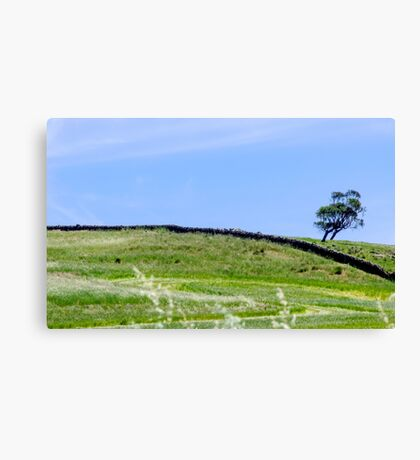 Mown Grass Canvas Print