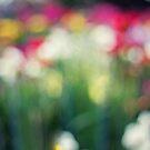 Bloom 2016 Calendar ~ Bloom by Sam wales by Bloom by Sam Wales