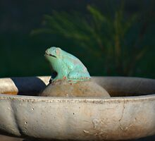 FROG IN A POND by ndarby1