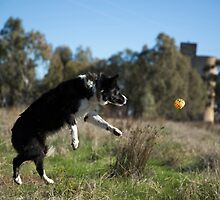 Up, Up & Away.... Alley In Full Flight ...To Her Ball. by mitpjenkeating