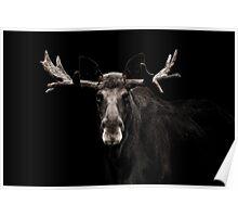 Low Key Moose Portrait Poster