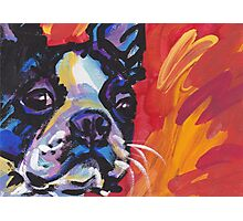 Boston Terrier Bright colorful pop dog art Photographic Print