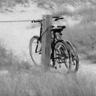 Bicycles At The Beach by Cynthia48