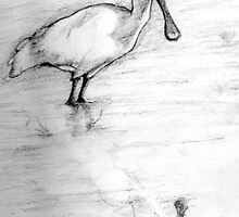 Royal Spoonbill (with reflection, pencil drawing) by ColinWilliams
