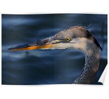 Great Blue Heron #4  Poster