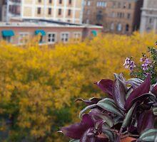 Gold & Purple Autumn Plants | Cincinnati Piatt Park by ckleshinski