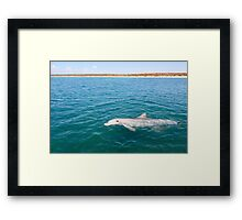 Dolphin Greeting Framed Print