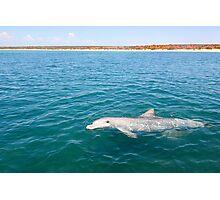 Dolphin Greeting Photographic Print