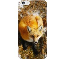 The Majestic Red Fox iPhone Case/Skin