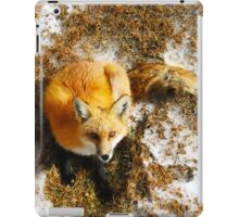 The Majestic Red Fox iPad Case/Skin