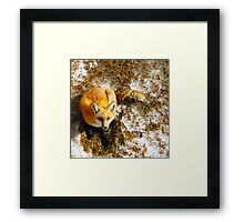 The Majestic Red Fox Framed Print