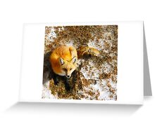 The Majestic Red Fox Greeting Card