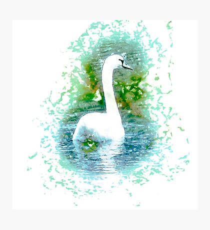 white swan swimming Photographic Print