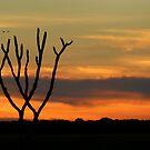 Bamurru Sunset by Christina Backus