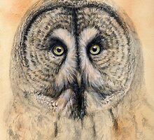 Great Grey Owl G041 by schukina by schukinart
