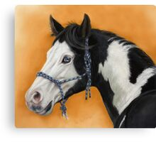 American Paint Horse P054 by schukina Canvas Print