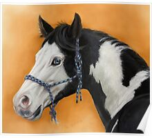 American Paint Horse P054 by schukina Poster