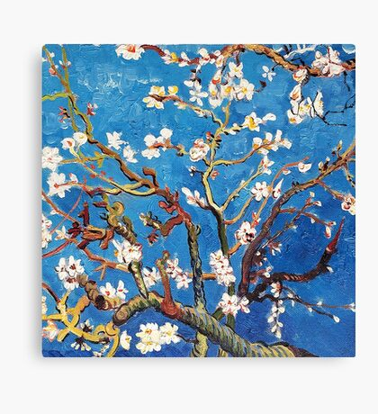 Branches of an Almond Tree in Blossom Canvas Print