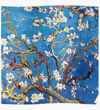 Branches of an Almond Tree in Blossom Poster