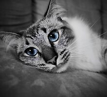 Blue Eyed Cat by Dfaurce