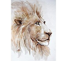 Wise lion Photographic Print