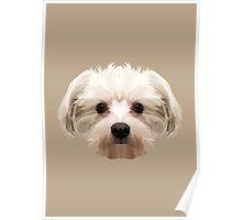 Maltese dog. Poster