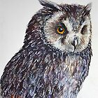 Owl by LauraMSS